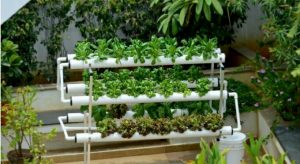 Tips Berkebun Beragam Sayuran Bagi Pemula