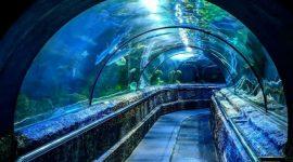 Wisata Akuarium Jakarta di Jakarta Aquarium